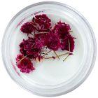 Flori uscate roz