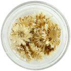 Flori albe pentru unghii – uscate