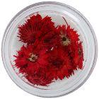 Flori uscate nail art – roșii